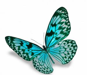 Bildschirmfoto-Schmetterling-300x257