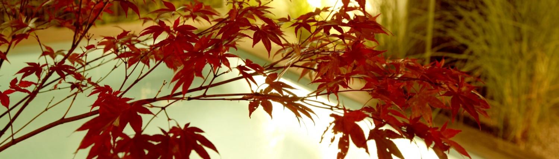 Informationen-Termine-Herbstlichter-_MG_0860